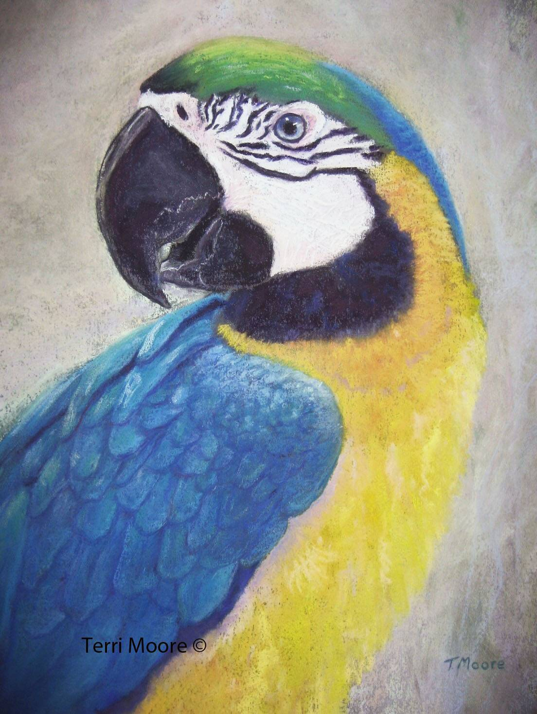 bird pet portrait sully